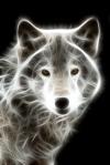 Mystic Werewolf
